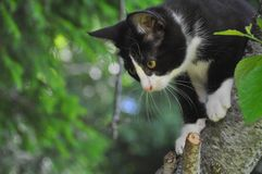 Escalada do gatinho Imagem de Stock Royalty Free