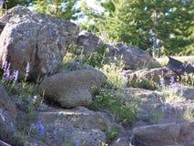 Escalada do Wildflower Foto de Stock Royalty Free