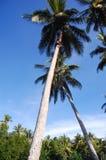 Escaladas do menino na palma de coco Fotos de Stock