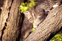 Escaladas macias pequenas do gatinho em uma árvore Foto de Stock
