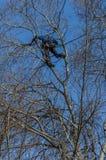 Escalador del árbol Fotografía de archivo