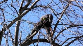 Escalador del árbol entre ramas almacen de video
