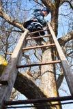 Escalando acima a árvore Fotografia de Stock Royalty Free