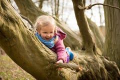 Escalando uma árvore Imagem de Stock