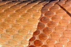 Escalas da serpente de Copperheas fotos de stock