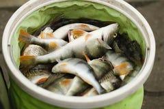 Escalas de peixes imagens de stock