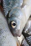 Escalas de peixes imagens de stock royalty free