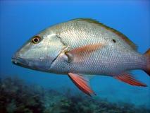 Escalas de peixes de prata Fotografia de Stock Royalty Free