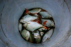 Escalas de pescados Imagenes de archivo