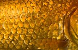 Escalas de pescados Foto de archivo