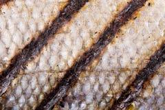 Escalas de pescados asadas a la parrilla Fotografía de archivo libre de regalías