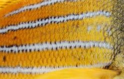 Escalas de un goldfish Imagen de archivo