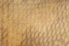 Escalas del fondo ahumado de la brema Foto de archivo