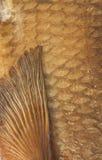 Escalas del fondo ahumado de la brema Imagen de archivo