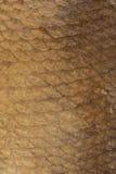 Escalas del fondo ahumado de la brema foto de archivo libre de regalías