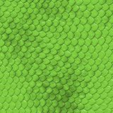 Escalas do verde Fotos de Stock
