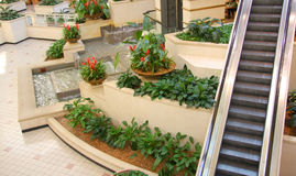 Escalator, garden, waterfall Stock Photos