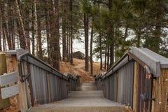 Escalera abajo a través de árboles Imagen de archivo