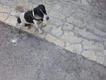 Escalera al perrito II Imágenes de archivo libres de regalías