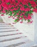 Escalera con flores fotografía de archivo