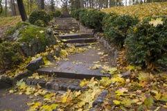 Escalera con las hojas en Autumn Park Fotos de archivo