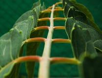Escalera de hojas 免版税图库摄影