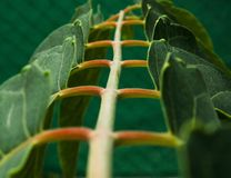 Escalera de hojas. Foto artistica de hojas formando escalera Royalty Free Stock Photography