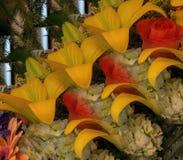 Escalera de la fragancia floral fotografía de archivo libre de regalías