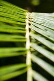 Escalera de la palma Fotografía de archivo
