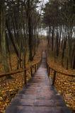 Escalera de madera del bosque en otoño Imagen de archivo libre de regalías