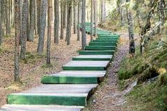 Escalera de madera del verde largo en la madera como el camino Fotografía de archivo