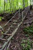 Escalera de madera en bosque Imagen de archivo libre de regalías