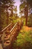Escalera de madera en bosque Foto de archivo
