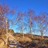 Escalera de madera en la arena y abedules contra el cielo azul Fotografía de archivo libre de regalías