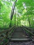 Escalera de madera en una trayectoria de la naturaleza Fotografía de archivo