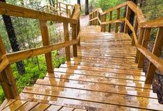 Escalera de madera mojada en el bosque Foto de archivo libre de regalías