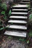 Escalera de madera vieja y resistida en el arbusto Fotografía de archivo libre de regalías
