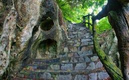 Escalera de piedra asombrosa, cerca, árbol Imágenes de archivo libres de regalías