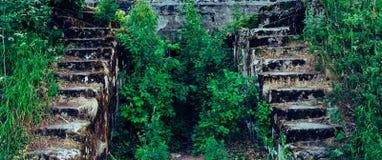 Escalera de piedra en el bosque Fotos de archivo
