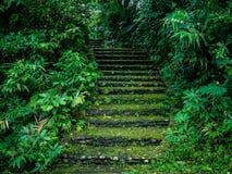 Escalera de piedra en el bosque foto de archivo libre de regalías