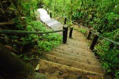 Escalera de piedra en parque de naturaleza Foto de archivo libre de regalías