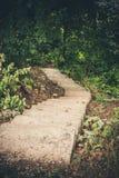 Escalera de piedra estrecha, desapareciendo en las profundidades del bosque abajo Fotos de archivo