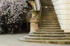 Escalera de un castillo en Praga con el árbol floreciente Fotos de archivo libres de regalías