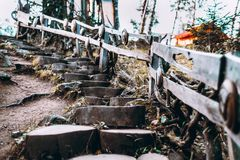 Escalera decorativa de madera en bosque Imagen de archivo