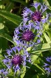 Escalera en azul y púrpura Fotos de archivo