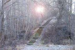 Escalera en bosque Fotografía de archivo