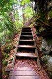 Escalera en el bosque Fotos de archivo