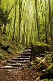 Escalera en la madera Fotografía de archivo libre de regalías