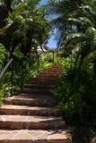 Escalera en las zonas tropicales Fotos de archivo