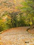 Escalera en otoño Fotos de archivo libres de regalías